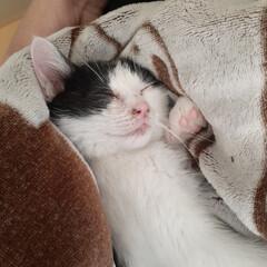 里親募集/里親探し/子猫/保護猫/フォロー大歓迎 1月4日 自宅裏の用水路に仔猫が… 2階…