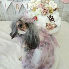 リメイク/ヨープ-/ミックス犬/犬との生活/犬との暮らし/レースクラウン/... 12月3日  今日はのん5歳のお誕生日と…