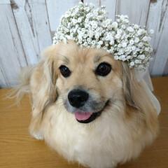 犬派/令和の一枚/フォロー大歓迎/LIMIAファンクラブ/LIMIAペット同好会/わんこ同好会/... 子供の頃から犬派です🐶💕 去年の写真です…