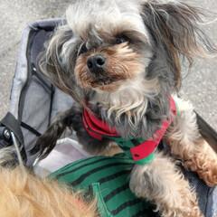 犬服ハンドメイド/犬服/ヨープー/犬/令和元年フォト投稿キャンペーン/令和の一枚/... . のんも可愛いでしょ🍉 . お散歩はま…