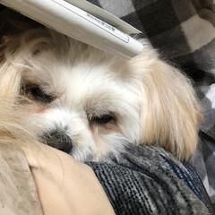 こたつでぬくぬく/おやすみショット パパさんの膝の上が昼寝のベッド 何をされ…