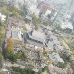 春のフォト投稿キャンペーン/はじめてフォト投稿 東京タワーから増上寺の花見