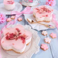 桜のレアチーズ/わたしのごはん/桜スイーツ/レアチーズケーキ/桜 春を感じるレアチーズケーキを作りました♫…