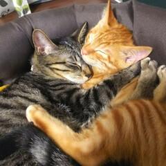 おやすみショット いつも一緒の2匹です🐱🐱 絡まりあってま…