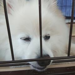 いぬすたぐらむ/犬好きな人と繋がりたい/犬好き/犬のいる生活/犬のいる暮らし/ポメラニアンのいる生活/... (๑'-ωก̀๑)ネムネム...ウトウト…