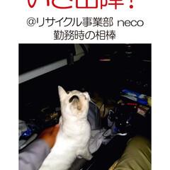 フォロー大歓迎/住まい/不動産・住宅/工務店/リサイクル/猫/... こんにちは!長野県茅野市の工務店「エルハ…