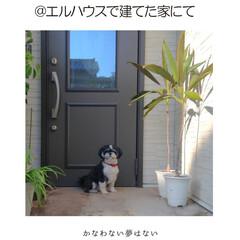 フォロー大歓迎/犬/ペット/犬と暮らす家/住宅設備/玄関/... エルハウスで建てたおうちの前で一枚。 「…