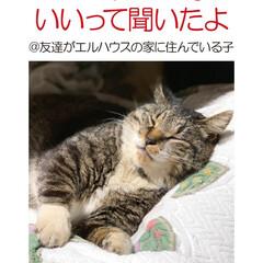 フォロー大歓迎/住まい/不動産・住宅/工務店/ネコ/猫/... こんにちは!長野県茅野市の工務店「エルハ…