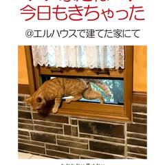 フォロー大歓迎/不動産・住宅/工務店/住まい/猫/猫と暮らす/... エルハウスで家を建てられたOBさんからの…