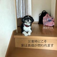 フォロー大歓迎/犬/イヌ/犬と暮らす家/住まい/注文住宅/... こんにちは!長野県茅野市の工務店「エルハ…