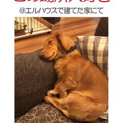 フォロー大歓迎/犬/イヌ/犬と暮らす家/住まい/注文住宅/... エルハウスOBさんからの写真です。 安心…