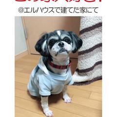フォロー大歓迎/犬/イヌ/犬と暮らす家/住まい/注文住宅/... エルハウスOBさんからの写真です。 ワン…