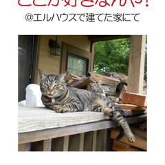フォロー大歓迎/不動産・住宅/工務店/猫/猫と暮らす/ペットと暮らす/... エルハウスで家を建てられた、OBさんから…