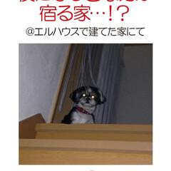 フォロー大歓迎/犬/イヌ/ペット/犬と暮らす家/新築/... エルハウスで家を建てられた、OBさんから…