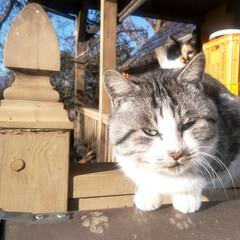 フォロー大歓迎/不動産・住宅/工務店/猫/猫と暮らす/ペットと暮らす/... エルハウスで家を建てられたOBさんからの…