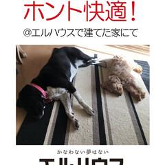 フォロー大歓迎/犬/ペット/犬と暮らす家/新築/新築一戸建て/... エルハウスで建てたお家にて。 あまりに快…