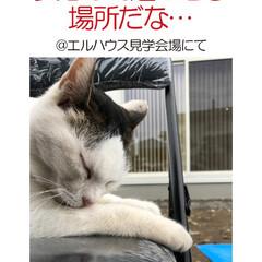 フォロー大歓迎/住まい/不動産・住宅/工務店/猫/ネコ/... こんにちは!長野県茅野市の工務店「エルハ…