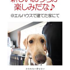 フォロー大歓迎/犬/イヌ/ペット/犬と暮らす家/新築/... もうすぐおうちが完成✨わんちゃんも、新し…
