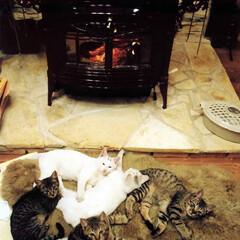 フォロー大歓迎/不動産・住宅/工務店/猫/猫と暮らす/ペットと暮らす/... エルハウスで家を建てた、スタッフのおうち…