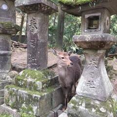 奈良/おでかけ/風景/おでかけワンショット 静寂
