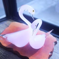 三好俊明/バレンタイン2020/ガラス/白鳥/カップル/仲良し/... 出窓に置いてある ガラスの白鳥です。 と…