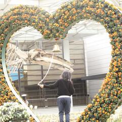 バレンタイン2020/バレンタイン/鈴/スズ/ハート/アーチ/... 大阪長居公園植物園で撮影 女性がベルを鳴…