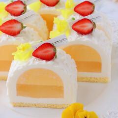 萌え断/cheesecake/Cafe/sweets/cake/LEMON/... 🍋レモンチーズケーキ  前回のカットve…(2枚目)