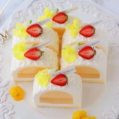 萌え断/cheesecake/Cafe/sweets/cake/LEMON/... 🍋レモンチーズケーキ  前回のカットve…(3枚目)