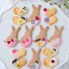 Flower/cookies/おうちカフェ/お花/手作りクッキー/エディブルフラワー/... 🌸押し花クッキー  エディブルフラワーの…(1枚目)
