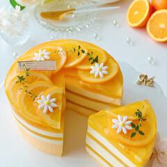 チーズケーキ/柑橘/オレンジゼリー/手作りおやつ/手作りケーキ/手作りスイーツ/... 🍊しましまオレンジ🧡チーズムースケーキ …(2枚目)