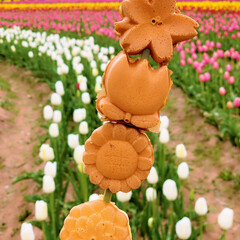 癒し/チューリップ祭/広島/お花/世羅高原農場/春のフォト投稿キャンペーン/... お花に癒された1日🌷  農場焼きも可愛く…