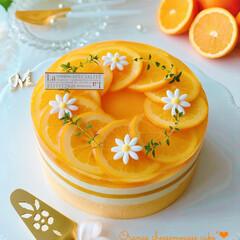 チーズケーキ/柑橘/オレンジゼリー/手作りおやつ/手作りケーキ/手作りスイーツ/... 🍊しましまオレンジ🧡チーズムースケーキ …