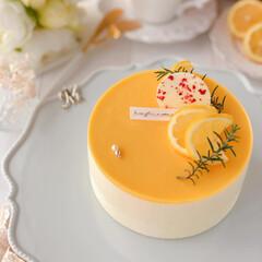 cheesecake/cake/sweets/LEMON/Cafe/萌え断/... 🍋レモンチーズケーキ  レモンカードがた…(3枚目)