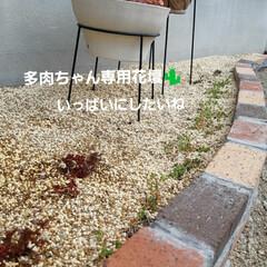 小さな花壇の記録 ここは日当たり良好な花壇🌱 急に日差しが…