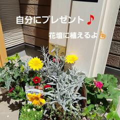 小さなお庭の花/春のお花🈵 誕生日のプレゼントは、ここ最近は悲しくも…