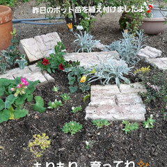 小さな花壇の記録 とりあえず植えました💕 古い花壇用のブロ…