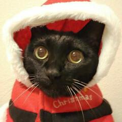 スリーコインズ/猫グッズ/猫派/ねこ部/ねこ雑貨/猫のいる暮らし/... スリーコインズでみつけたペットのお洋服 …