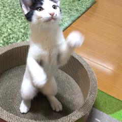 猫/猫派/LIMIAペット同好会/にゃんこ同好会 譲渡会で出会った子との生活がスタートしま…