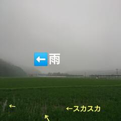 苦労/田んぼ/農業/米農家/暮らし 🍀米※農家さん🍀  水入口✨尻水口ってし…
