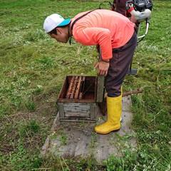 バカ親/養蜂/家族/暮らし/田舎暮らし 🍀何歳になっても🍀  今度は 蜂農家さん…