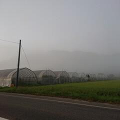 南郷トマト/ブランドトマト/GAP/トマト農家さん/暮らし 🍀🍅農家さん🍀  昨日の朝もや🤪からの …