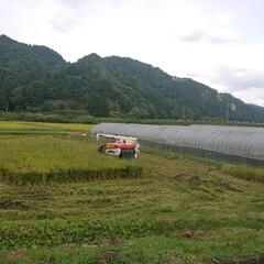 秋風/秋空/秋/息子が農家さん/稲刈り/新米/... 🍀米農家さん🍀  本格的な秋ですね~ 肌…(2枚目)