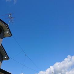 ツボミ/休日/お天気/マリゴールド/緑のある暮らし 🍀こちら快晴🍀  雲隠れしていたお天とう…(3枚目)