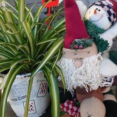 クリスマス雑貨/ガーデニング/緑のある暮らし/玄関/セリア/雑貨 🍀晴天なり🍀  今週末から ❄️雪予報ら…(2枚目)
