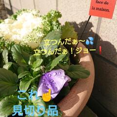 保護苗ちゃん/ガーデニング/庭のある暮らし/花のある暮らし/緑のある暮らし/玄関 🍀花束をどーぞ🍀  ぐっともーにんぐ で…(2枚目)
