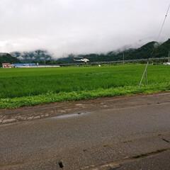 梅雨明け希望/家族/暮らし/米農家/農家さん 🍀米 農家さん🍀  雨が上がったのと 同…