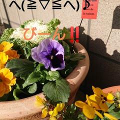 保護苗ちゃん/ガーデニング/庭のある暮らし/花のある暮らし/緑のある暮らし/玄関 🍀花束をどーぞ🍀  ぐっともーにんぐ で…(3枚目)