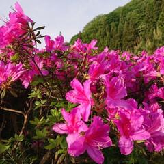 花のある暮らし/暮らし 🍀もりもりんこ🍀  Good morni…