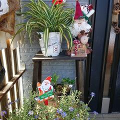クリスマス雑貨/ガーデニング/緑のある暮らし/玄関/セリア/雑貨 🍀晴天なり🍀  今週末から ❄️雪予報ら…(3枚目)