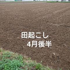 東北の春/暮らし 🍀農家さん🍀  農家さんのトラクターが何…